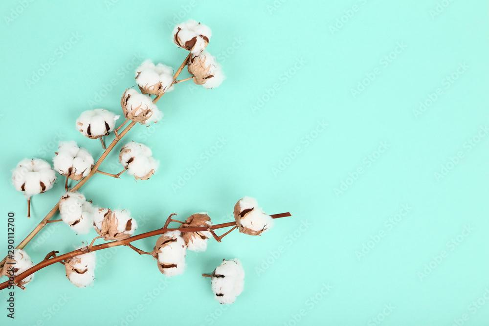 Fototapety, obrazy: Cotton flowers on mint background