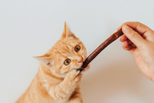 A Hungry Ginger Tabby Kitten I...