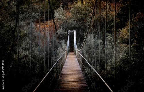 Beautiful horizontal shot of a long bridge surrounded by high trees in the forest - 290125351