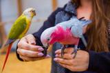 Fototapeta Tęcza - Kolorowe papużki bawiące się