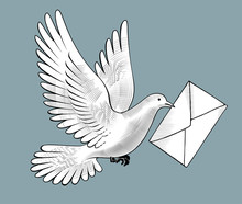 Flying White Post Pigeon With A Letter