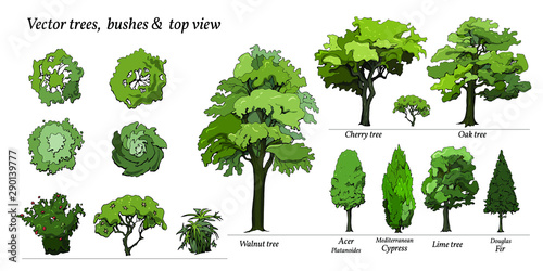 Types of Trees, Bushes, Top view for landscape design Canvas Print