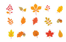 Autumn Leaves Set. Fall Leaf Nature Icons Over White Background. Nature Floral Symbol Collection
