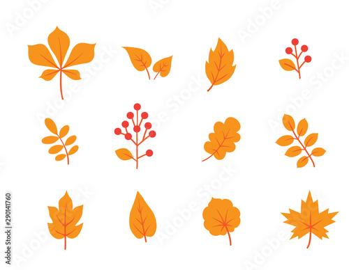 Obraz na plátně  Autumn leaves set