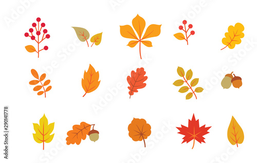 Obraz Autumn leaves set. Fall leaf nature icons over white background. Nature floral symbol collection - fototapety do salonu
