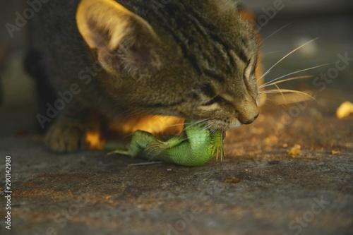 Cat eat lizard Tableau sur Toile