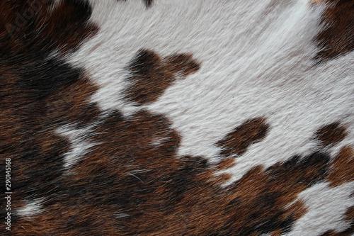 Photo sur Aluminium Vache Texture Pelage Stiennon Jacques
