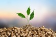canvas print picture Growing plant tree  on background