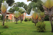 Tropical Garden With Green Vegetation And Buildings. Resort In The Brazil Northeast.
