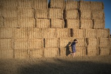 Woman Walking Past A Stack Of Hay Bales In A Field, Deux-Sevres, Nouvelle Aquitaine, France