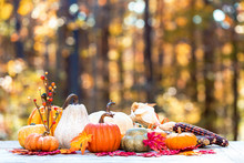 Variety Of Pumpkins Outside On A Fall Forest Background