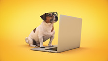 Business Concept Pet Dog Using Laptop Computer. 3d Rendering