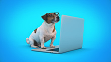 Business Concept Pet Dog Using...