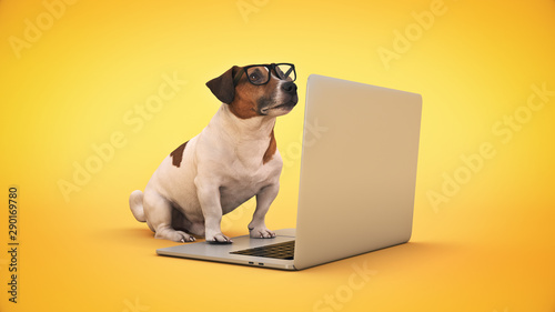 Fotomural business concept pet dog using laptop computer. 3d rendering