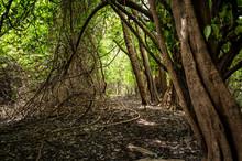 Bosques Y Humedales Cerca A Puerto Inirida Guainia _ Colombia
