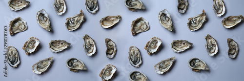 Fresh raw oysters on grey background Wallpaper Mural