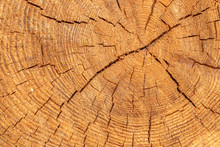 Wooden Cut Texture, Tree Rings...
