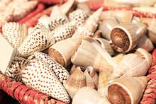 Beautiful Sea Shells In Basket...