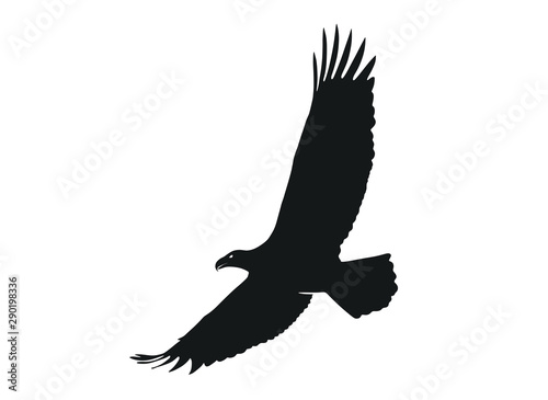 Obraz na plátne eagle in flight with wide wingspan