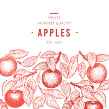 Apple Branch Design Template. Hand Drawn Vector Garden Fruit Illustration. Engraved Style Fruit Frame. Retro Botanical Banner.