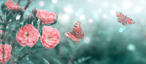 Autocollant pour porte Paon Mysterious fairytale spring or summer floral banner with blooming pink rose flowers and flying peacock eye butterflies on blurred beautiful background in soft pastel colors and shiny glowing bokeh