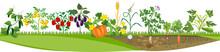 Kitchen Garden Or Vegetable Ga...