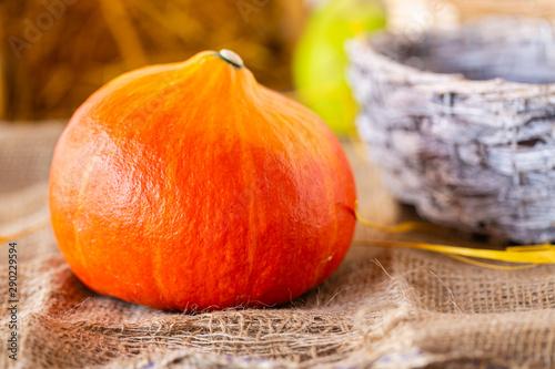 Swieza dynia. Jesienne owoce i warzywa. Kolory jesieni. Zywa kolorystyka. Dynia i gruszka. Zapasy na zime.