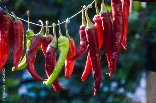 Tuinposter Hot chili peppers red hot chili pepper hanging on a thread and dried in the sun on a warm autumn day