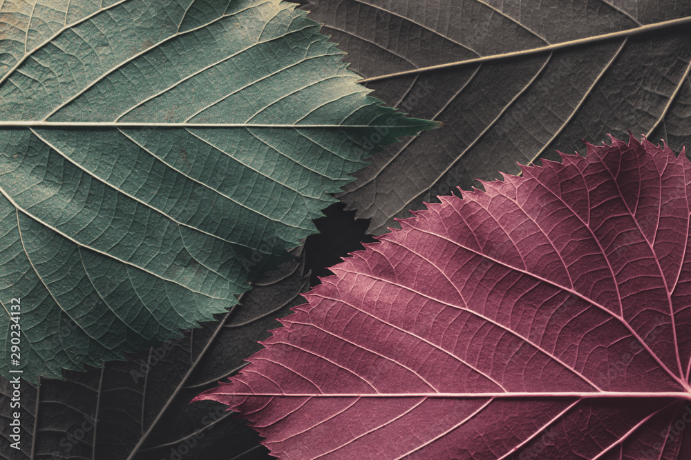 Fototapety, obrazy: Autumn leaves, natural background.