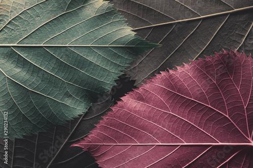 Obraz Autumn leaves, natural background. - fototapety do salonu