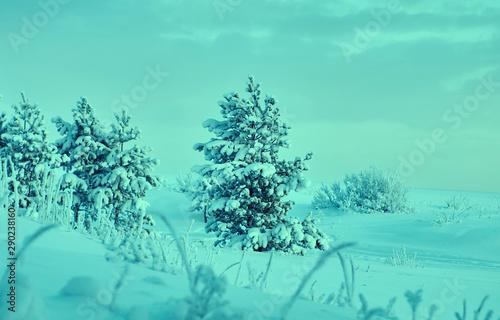 Poster Vert corail Beautiful Christmas landscape