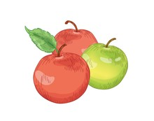 Red And Green Apple Fruits Han...