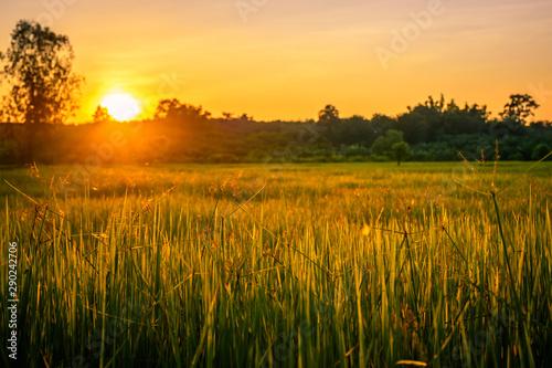 Foto auf Gartenposter Landschappen Scenic View Of Agricultural Field Against Sky During Sunset