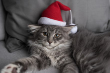 Portrait Of A Blue Tabby Maine Coon Kitten Lying On The Couch Wearing A Santa Claus Hat