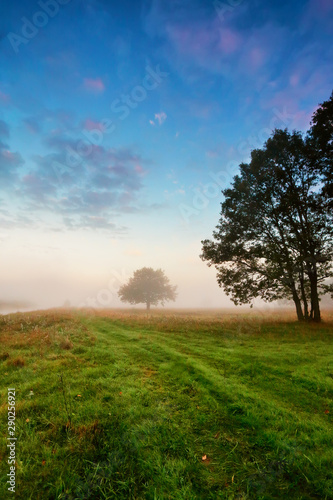 Fotografia Autumn scene on a meadow with oak trees.
