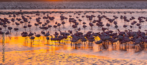 Photo  Flamingos, Salinas, Walvis Bay, Namibia, Africa