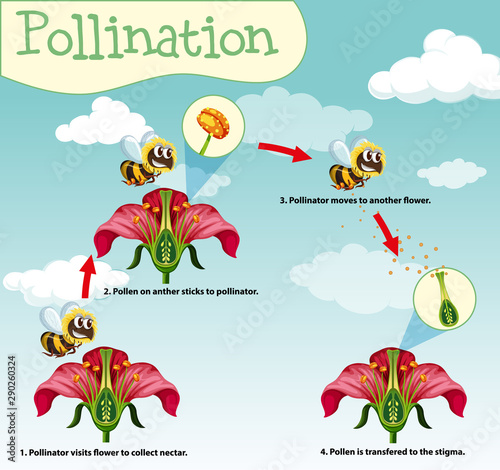 Diagram showing pollination with bee and flowers Wallpaper Mural
