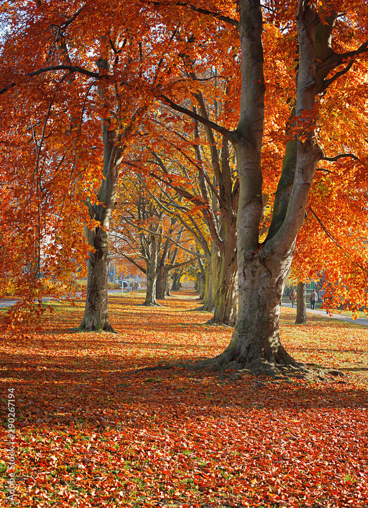 Fototapety, obrazy: Autumn. Gold Trees in a park