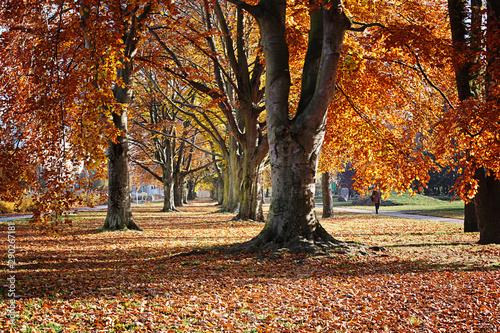 Foto auf Leinwand Violett rot Autumn. Gold Trees in a park