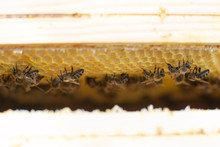 Bee Frames - Bee's Nest In The Hive