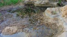 Acqua Stagnante
