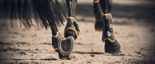 The Shod Hooves Of A Black Hor...