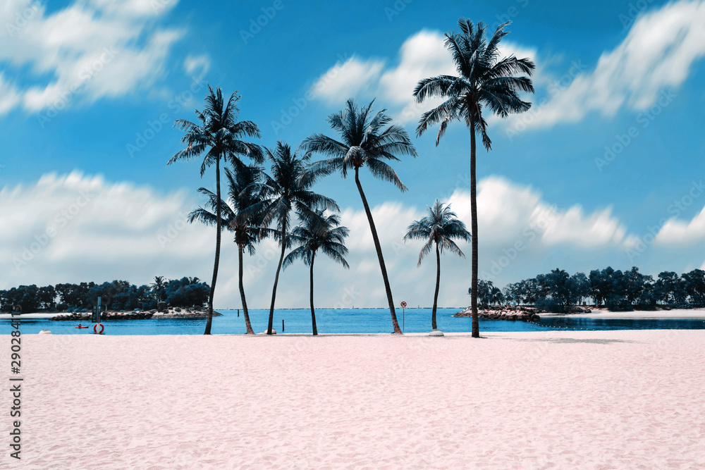 Fototapeta Group of coconut trees with the white sands on the beach with beautiful clouds sky background.