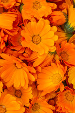 A Carpet Of Orange Calendula Flowers. Bright Natural Background. The Medicinal Plant Calendula Officinalis Is Commonly Known As Marigolds.