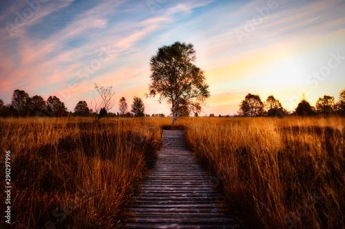 Cadres-photo bureau Marron Lonley Tree