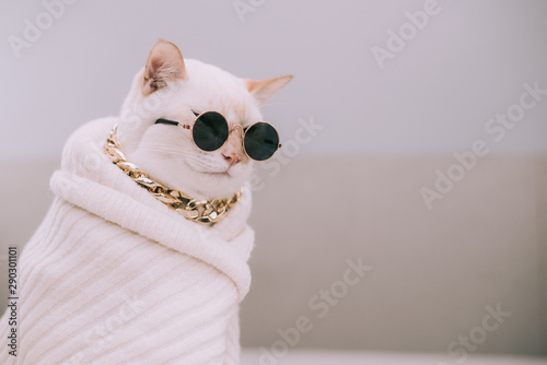 Obraz Portrait of White Cat wearing glasses,pet fashion concept.White cat lying on bed. - fototapety do salonu