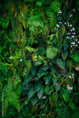Pinturas sobre lienzo  Tropical green leaves on dark background.
