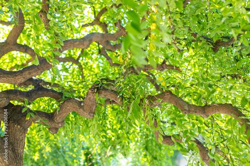 Fényképezés Green branchy tree