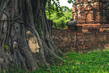 Buddha Head Embedded In A Banyan Tree, Ayutthaya, Thailand