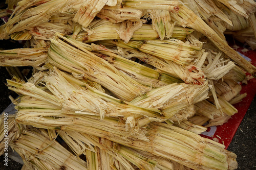 Photo Bagasse,waste of sugar cane,sugar cane after squeeze for drink,trash of sugar cane